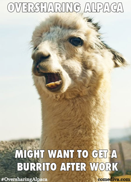 New Meme: Oversharing Alpaca - Comediva