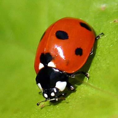 ladybug1204