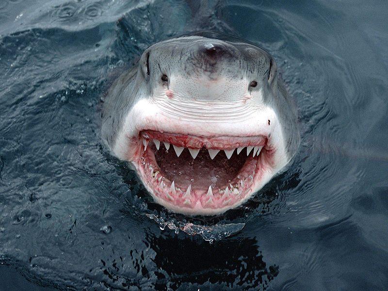 JawsHeadshot