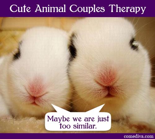 bunnies_050412