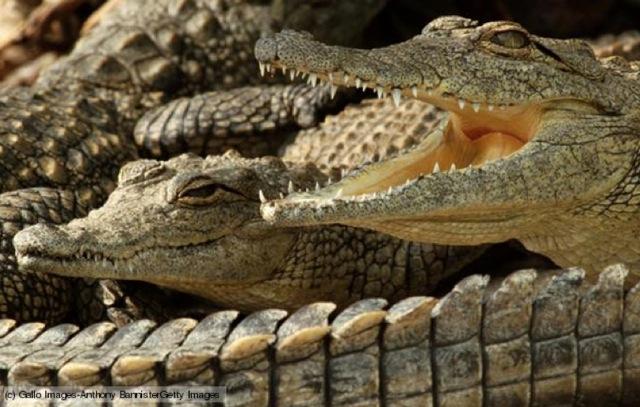 crocs_061812