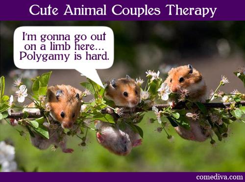 hamsters_050412