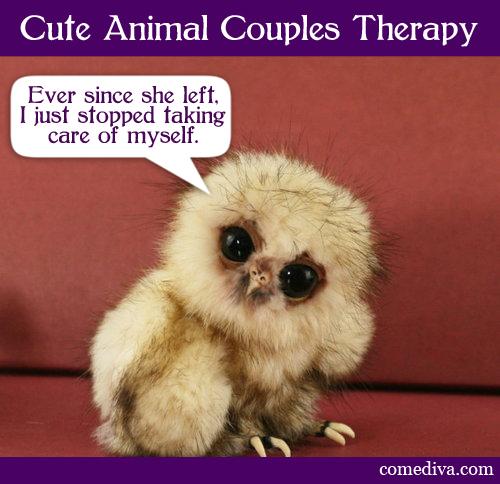 owl_050412