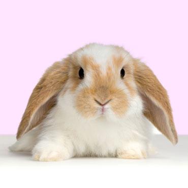 rabbit8132012