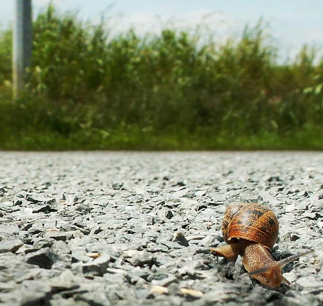 snailjourney_031612