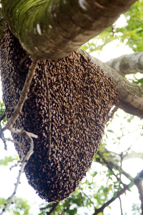 Tracker jacker hive