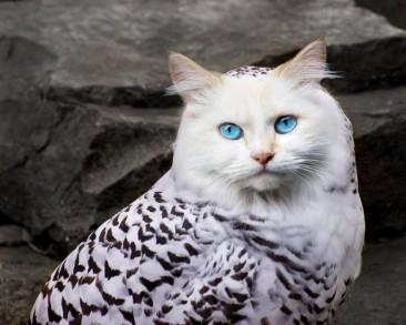 Meme Alert: Meowls