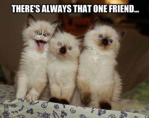 that one friend kitten meme