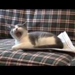 I'm a Stupid Cat