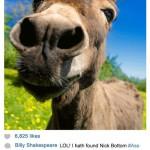 Shakespeare Donkey Instagram