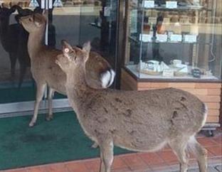 Come Along, Deer