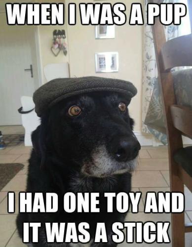dog-meme-25