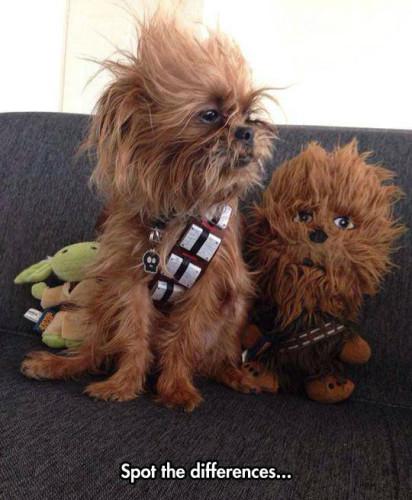 funny-dog-Chewbacca-toy-fur-1