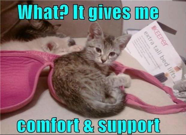 Funny-cat-cuddling-a-bra