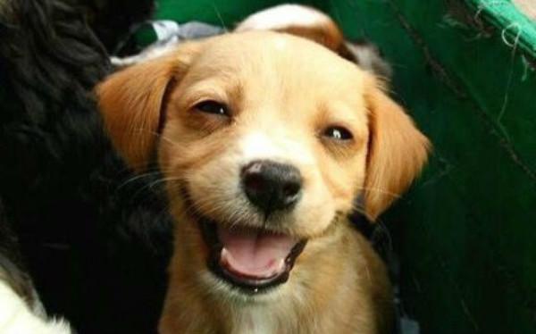 Smiling-Puppy-3-animals-31987252-648-404
