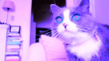 Kitty Apocalypse