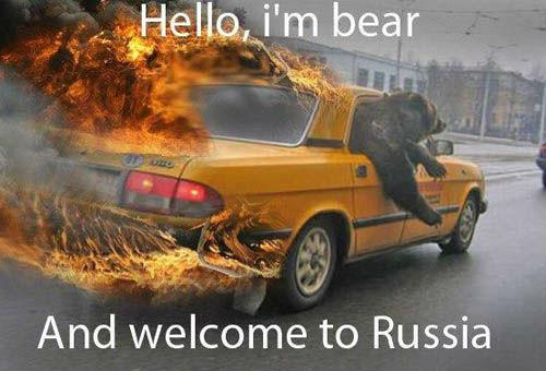 bear-driving-car
