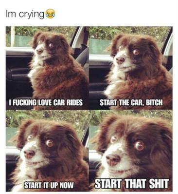 15 Funny Animals on Car Rides