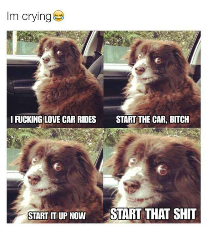 funny animals on car rides